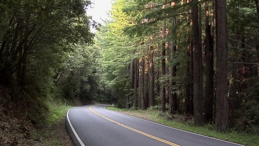 Rainy Day Girl Live Wallpaper Road Going Through The Forest Oregon Stock Footage Video