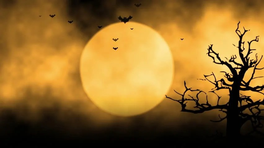 Fall Scenes Wallpaper With Pumpkins Flying Bats In The Light Of Spooky Moon Loop Stock