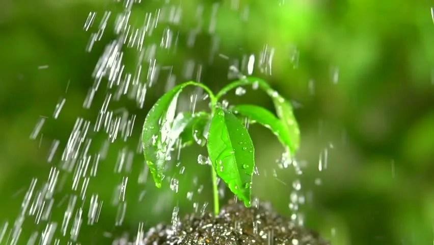 Falling Water Wallpaper 1080p Green Plant Of Mandarin Tree Under Water Drops Rotation