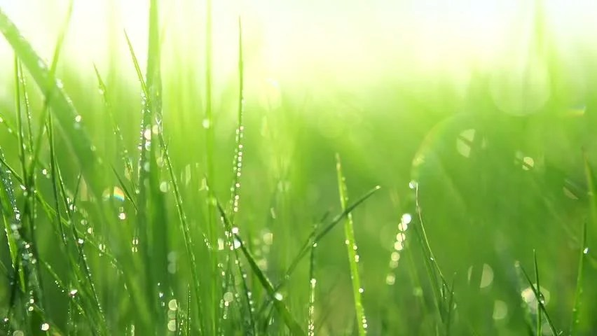 Water Drop Hd Wallpapers 1080p Grass With Dew Drops Blurred Grass Background With Water