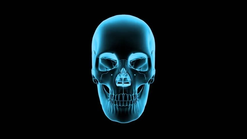 Skeleton Head Wallpaper 3d Head Skull Rotation And Animation Scan Loop Able Blue