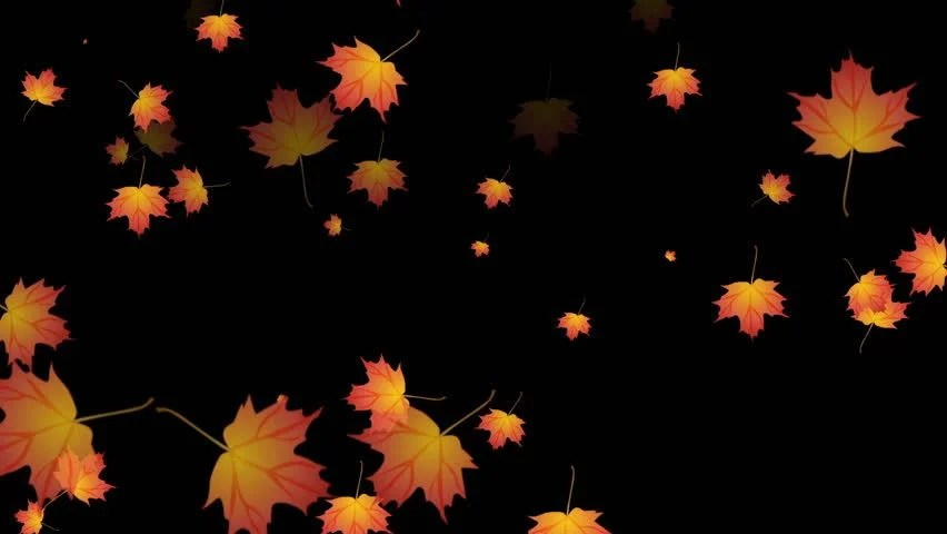Falling Maple Leaves Wallpaper High Definition Cgi Motion Backgrounds Ideal For Editing