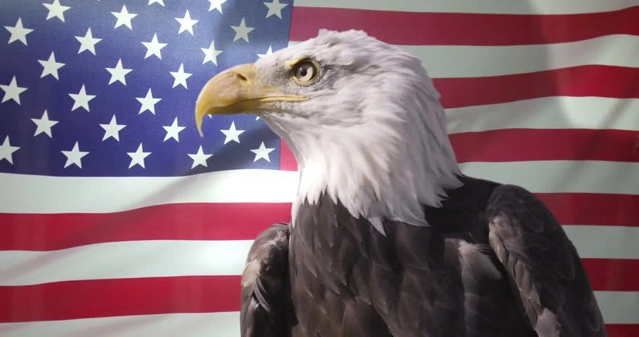 Fliesen Färben American Eagle With Animated Us Flag Green Screen Video
