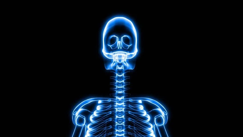 Wallpaper Hd Skeleton Rib Cage Footage Stock Clips