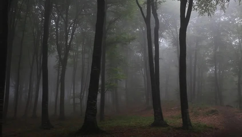 Foggy Fall Wallpaper Foggy Forest With Rain Drops Sound Stock Footage Video