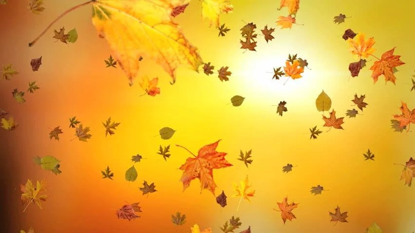 Falling Leaves Animated Wallpaper Fall Leaves Stock Footage Video 4801814 Shutterstock