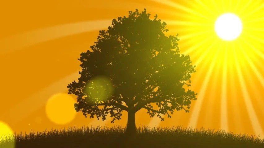 Free Fall Tree Wallpaper 4 Seasons Summer Animated Background Stock Footage