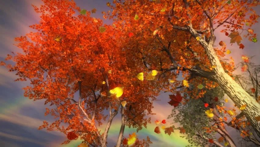 Falling Leaves Hd Live Wallpaper 1035 Fall Trees Falling Leaves And Rainbow Storm Stock