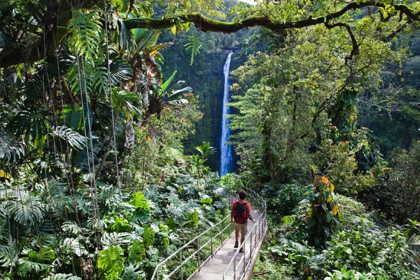 Akaka Falls Wallpaper To Do In Hawaii The Ultimate Vacation Travel Guide I