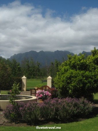 View of the gardens and backdrop of the Vergelegen winery in Stellenbosch, South Africa near Cape Town