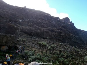 The Barranco Wall on the Machame Route climbing Mt Kilimanjaro