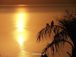 sunset, Jordan, Dead Sea, birds, palm tree, golden, travel, photo, Olympus