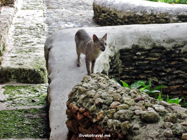 Altos de Chavon, Dominican Republic, La Romana, travel, skinny cat
