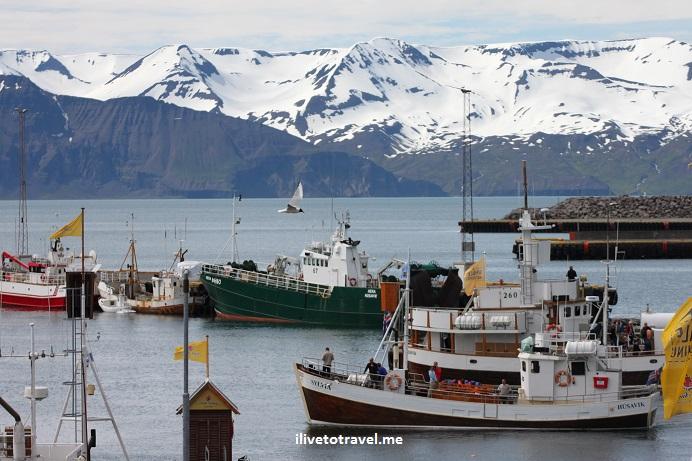 Husavik, Iceland, whale watching tour, sea, boats