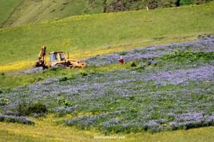 Vik, Iceland, village, scenic, landscape, photo, travel, Canon EOS Rebel
