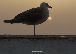 seagull, bird, sun, sunset, Essaouira, Morocco, ocean, Atlantic Ocean, travel, photo, Samsung Galaxy