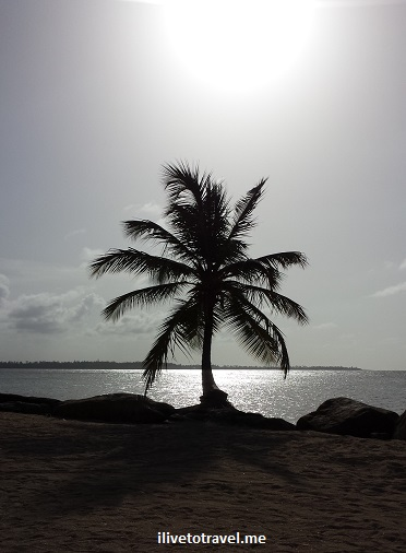 Puerto Rico, sunset, palm tree, ocean, silver, grey, photo, travel, Samsung Galaxy, silhouette