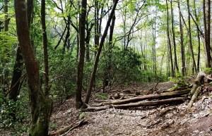 Atlanta, hiking, Georgia, mountains, nature, outdoors