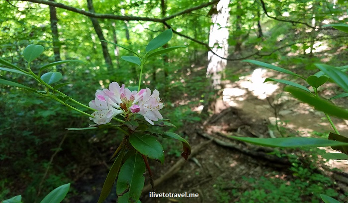 flowers, Vickery Creek, Roswell, Georgia, Chattahoochee, river, park, Atlanta, hiking, outdoors, nature, trail, Samsung Galaxy S7, photo