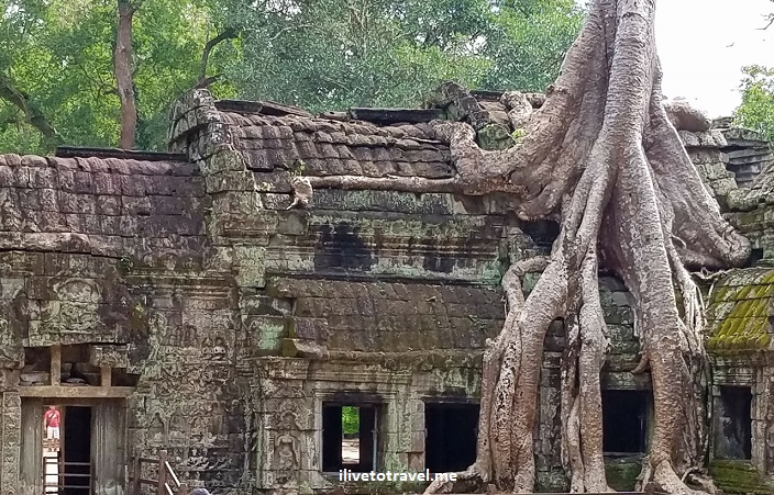 Ta Phrom, Cambodia, Cambodge, Angkor Wat, temple, ruins, banyan tree, travel, explore, adventure