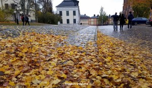Beautiful cobblestone street covered in leaves