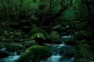 屋久島(やくしま)の画像