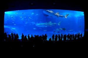 沖縄美ら海水族館(おきなわちゅらうみすいぞくかん)の画像
