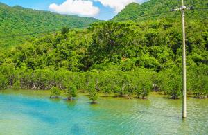 西表島(いりおもてじま)の画像
