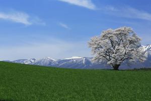 小岩井農場まきば園の画像