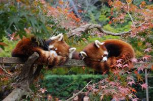 市川市動植物園(いちかわしどうしょくぶつえん)の画像