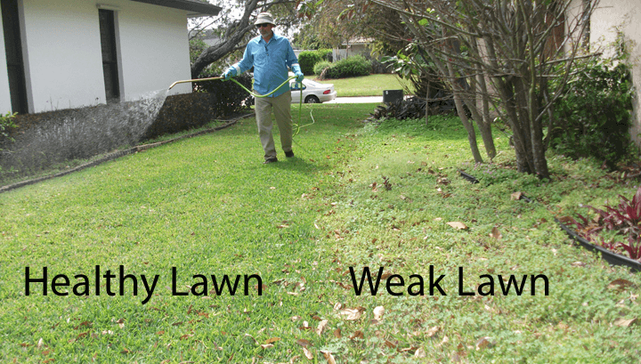 A Weed Free Lawn Is Not Sold In A Bottle I Love Turf