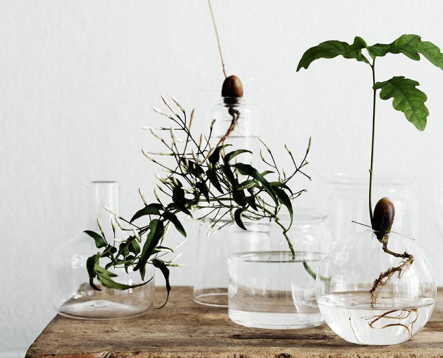 Idrocoltura - Le piante radicate in vasi di vetro