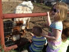 Feeding a Calf