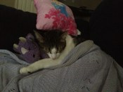 Tucked in for a cat nap.