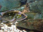 Here fishy fish