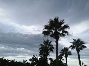 The palms.