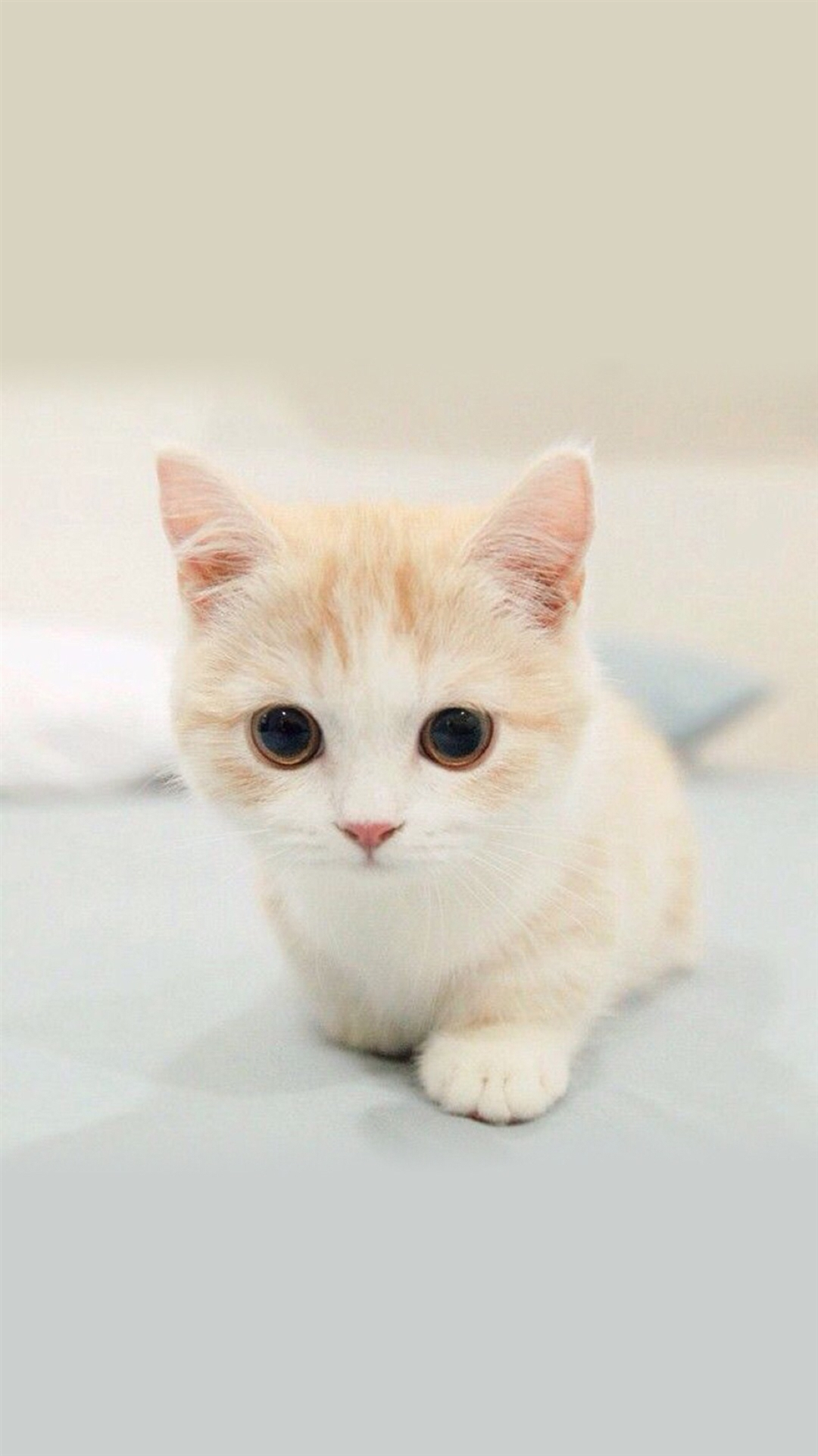Cute Cat Images For Wallpaper 手绘小猫可爱壁纸 皮皮网