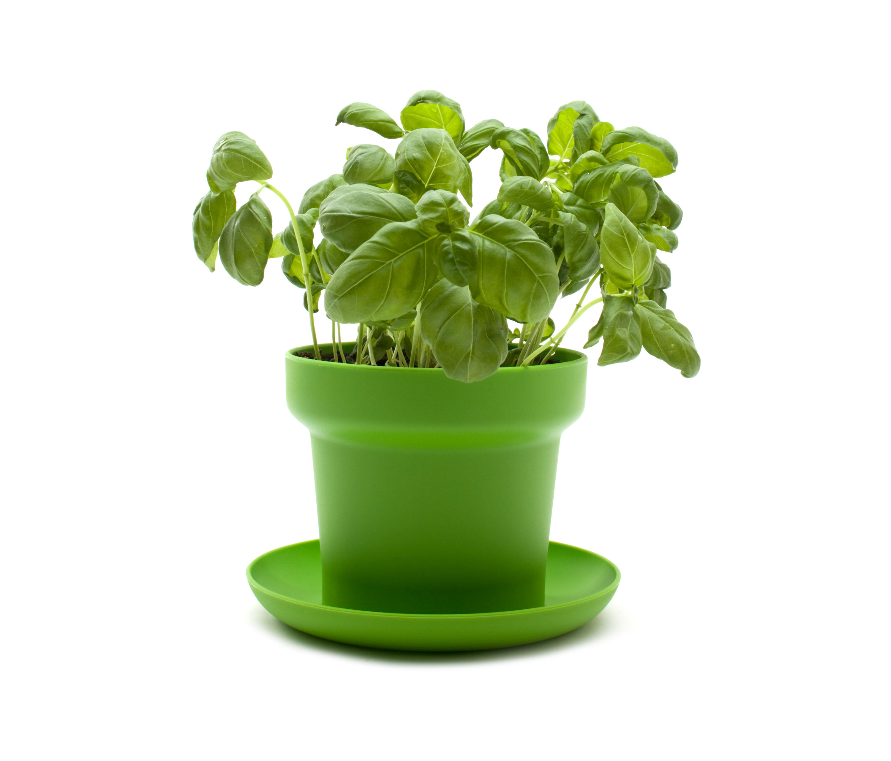 Green Planter Green Plant Pot Flowerpots Planters From Authentics