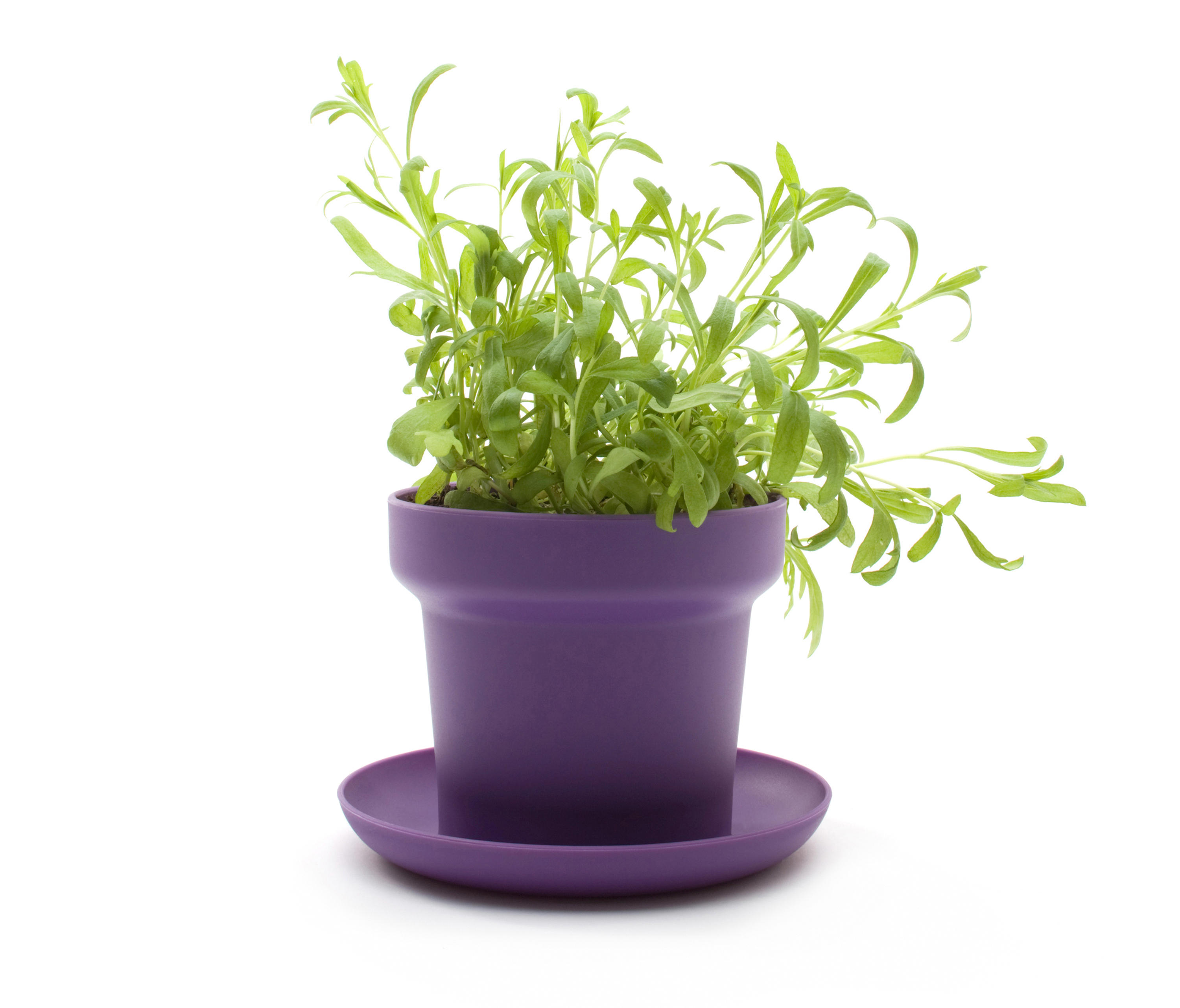 Green Planter Green Plant Pot Plant Pots From Authentics Architonic