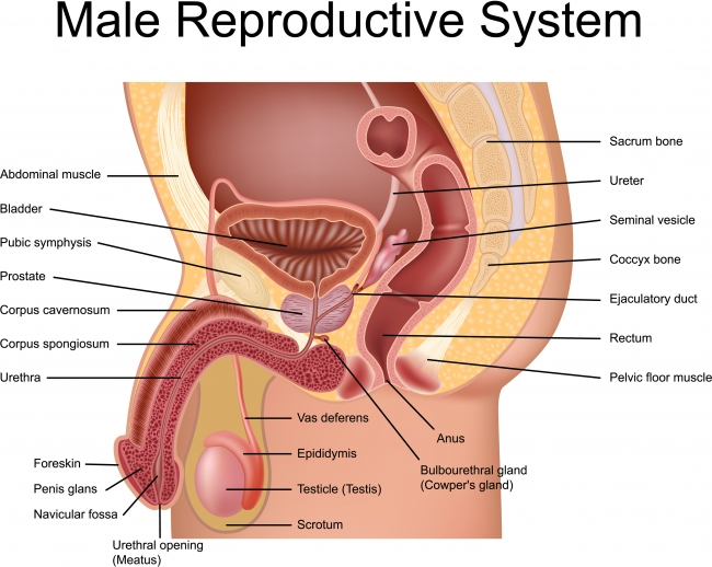 8 Letter Back Muscle Training Mens Fitness Male Reproductive System Guide To Ivf