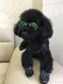 Small Of Dogs With Glasses