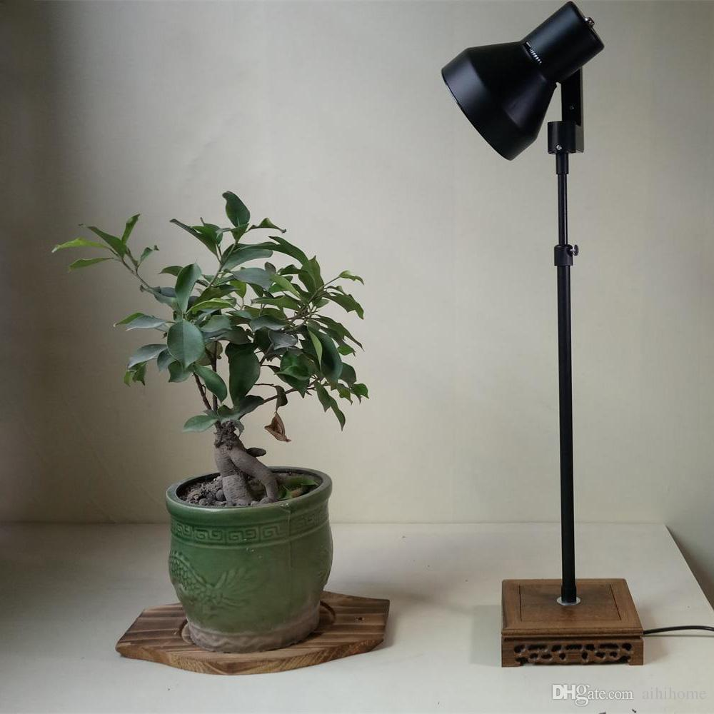 Lamp Plant Seoproductname
