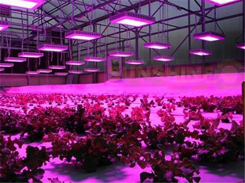 Grow Beleuchtung Led 300w Led Grow Light Plant Growing Light Fixture Vegetable