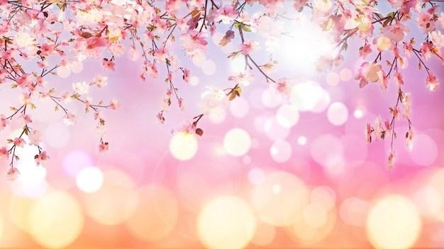 3d render de flor de cerezo en sobre fondo bokeh Descargar Fotos