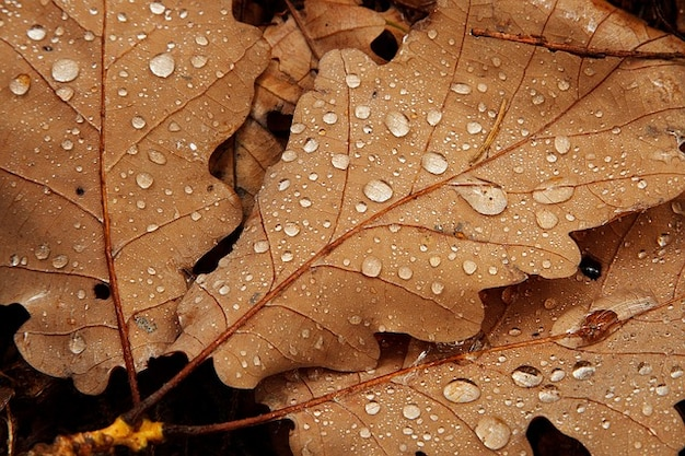 Drop Of Water Falling From A Leaf Dark Background Wallpaper Caduta Goccia Natura Foglia Dettaglio Autunno Marrone