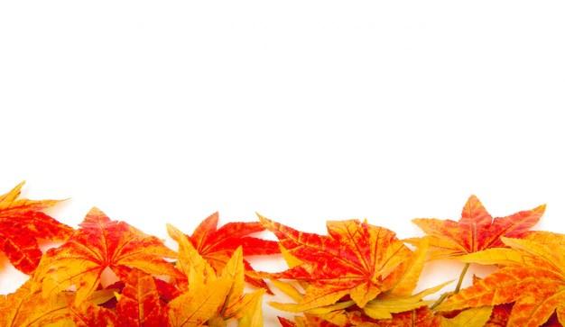 Autumn Falling Leaves Live Wallpaper Foglie Secche Su Uno Sfondo Bianco Scaricare Foto Gratis