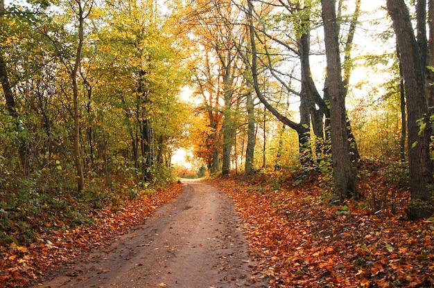 Fall Leaves Pathway Computer Wallpaper Paesaggio Autunnale Con Foglie Secche Scaricare Foto Gratis