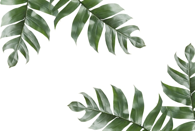 Fall Leaves Wallpaper Powerpoint Background Background Of Tropical Leaves With Copy Space Photo
