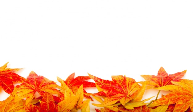 Free Fall Pumpkin Wallpaper Dry Autumn Leaves On A White Background Photo Free Download