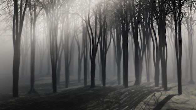 Spooky background of trees on a foggy night Photo Free Download